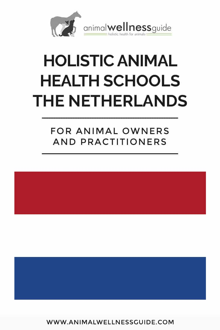 List of holistic animal health schools in The Netherlands where you can learn animal massage therapy, acupressure, Reiki and other energy work, homeopathy, animal communication, and lots more.