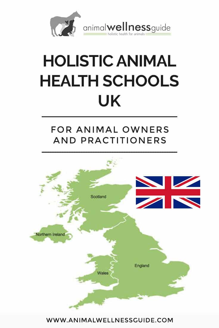 Interested in a holistic animal health career in the UK? Check out our list of schools that teach a variety of integrative health therapies for animals (and we have school lists for USA, Canada, Australia, New Zealand and Europe too!)