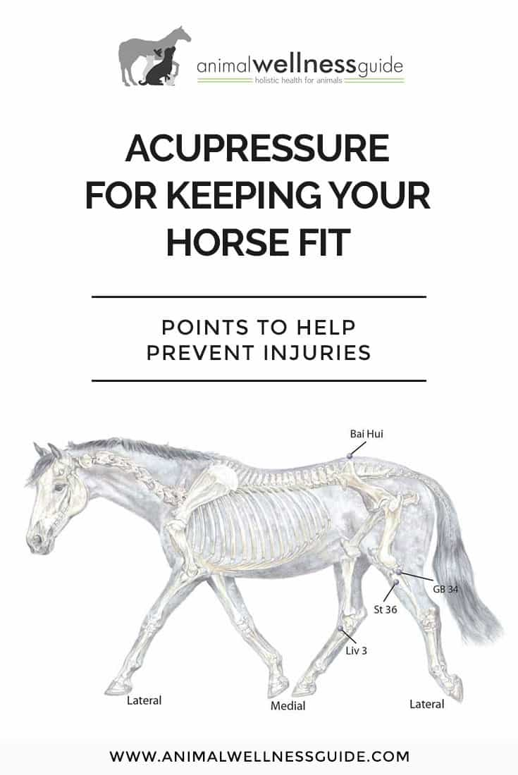 Acupressure points for horse fitness. Work these points to help your horse build up to his optimal performance level without injuries.