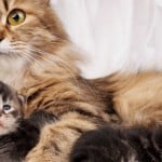 Cat mom with kitten