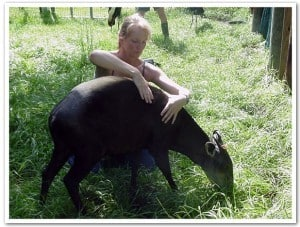 Reiki with a Duiker