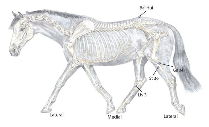 Acupressure For Keeping Your Horse Fit
