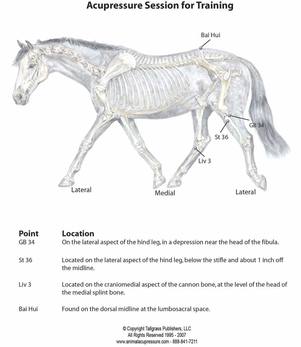 Acupressure chart for keeping horse fit
