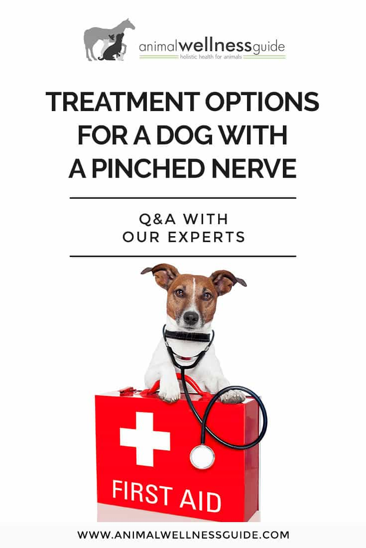 Reader question about pinched nerve treatment options for her dog. Our experts share their advice on what to do to provide relief.