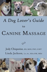 A dog lovers guide to canine massage