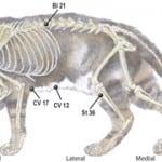 Feline digestion