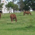 Equine grief and acupressure