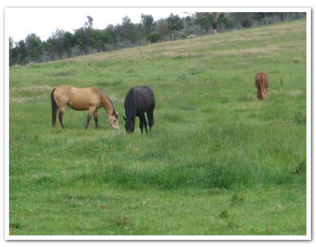 Equine grief and the bladder meridian