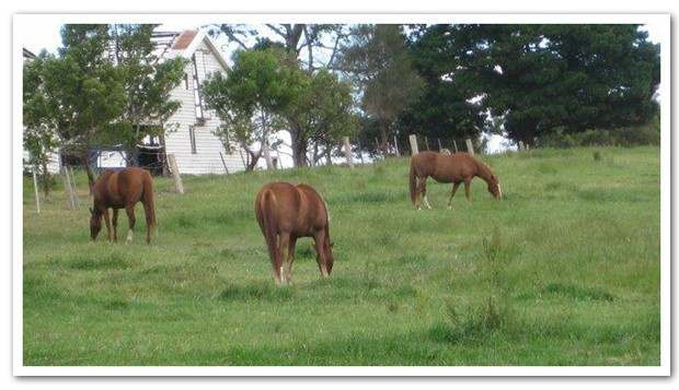 Equine grief and the bladder meridian 2