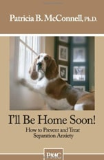 I'll Be Home Soon: How to Prevent and Treat Separation Anxiety in Dogs