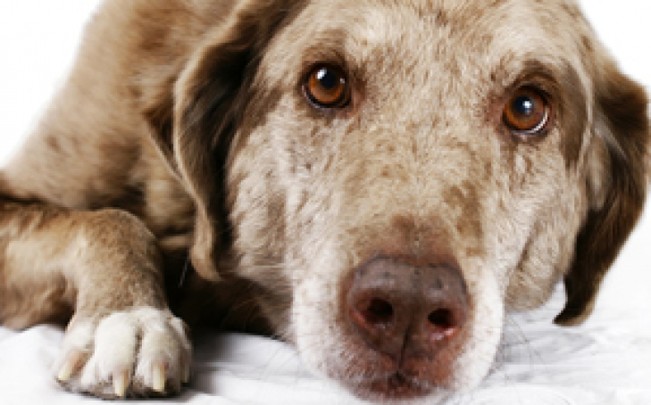 Assessing Pain In Animals