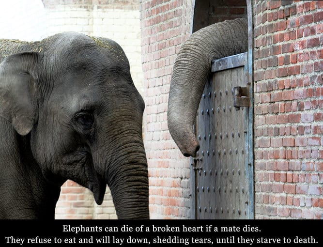 Grief and loss in elephants