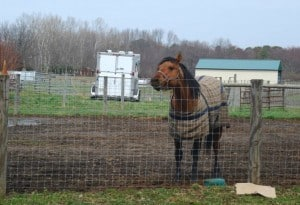 Fear in animals: Horses