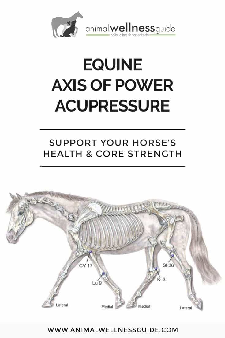 Support your horse's health and core strength with acupressure.