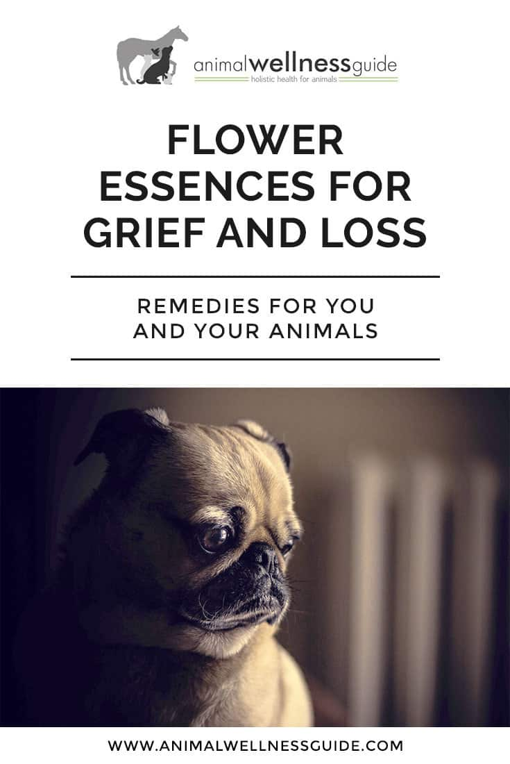 How flower essences can help with grief and loss and which flower remedies to use in the grief healing process for both yourself and your animals.