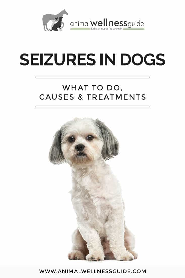In this article about seizures in dogs, veterinarian Beth Innis answers questions about different types of seizures, signs, symptoms, treatment, remedies, and more.