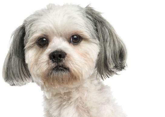 Seizures in Dogs - What to Do, Causes and Treatment