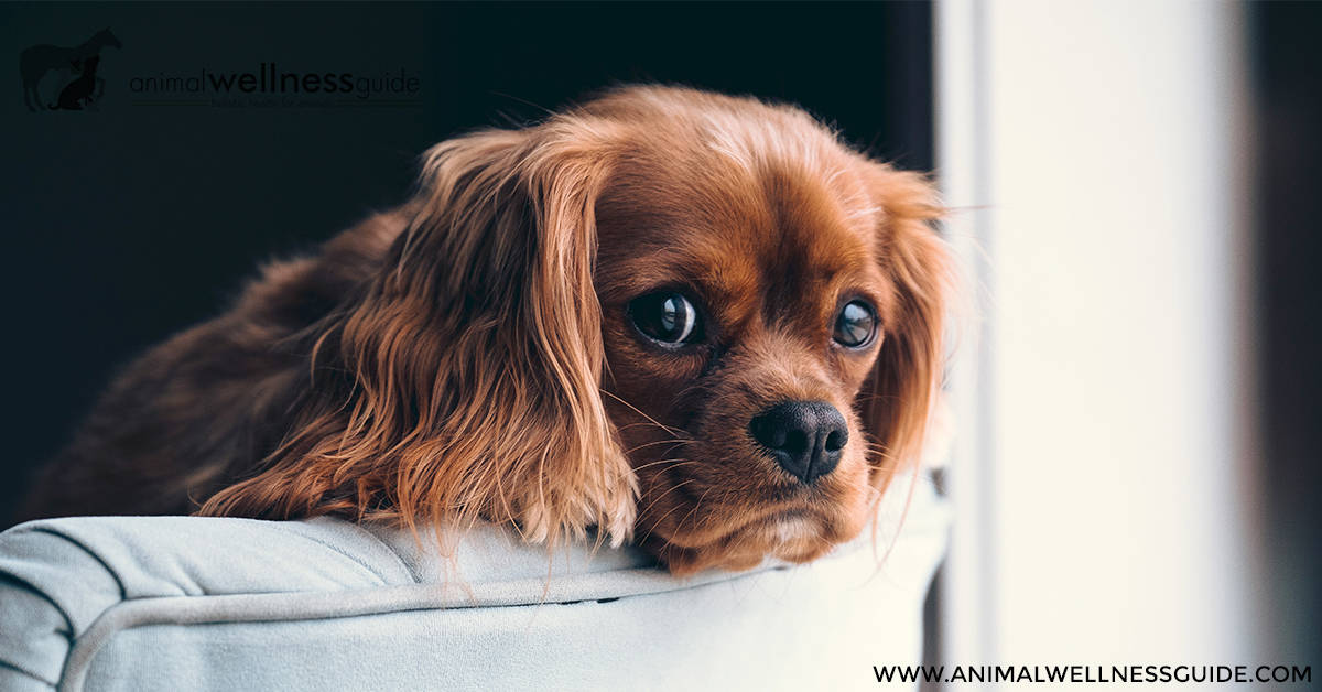 Bach Flower Essences For Fear In Animals Animal Wellness