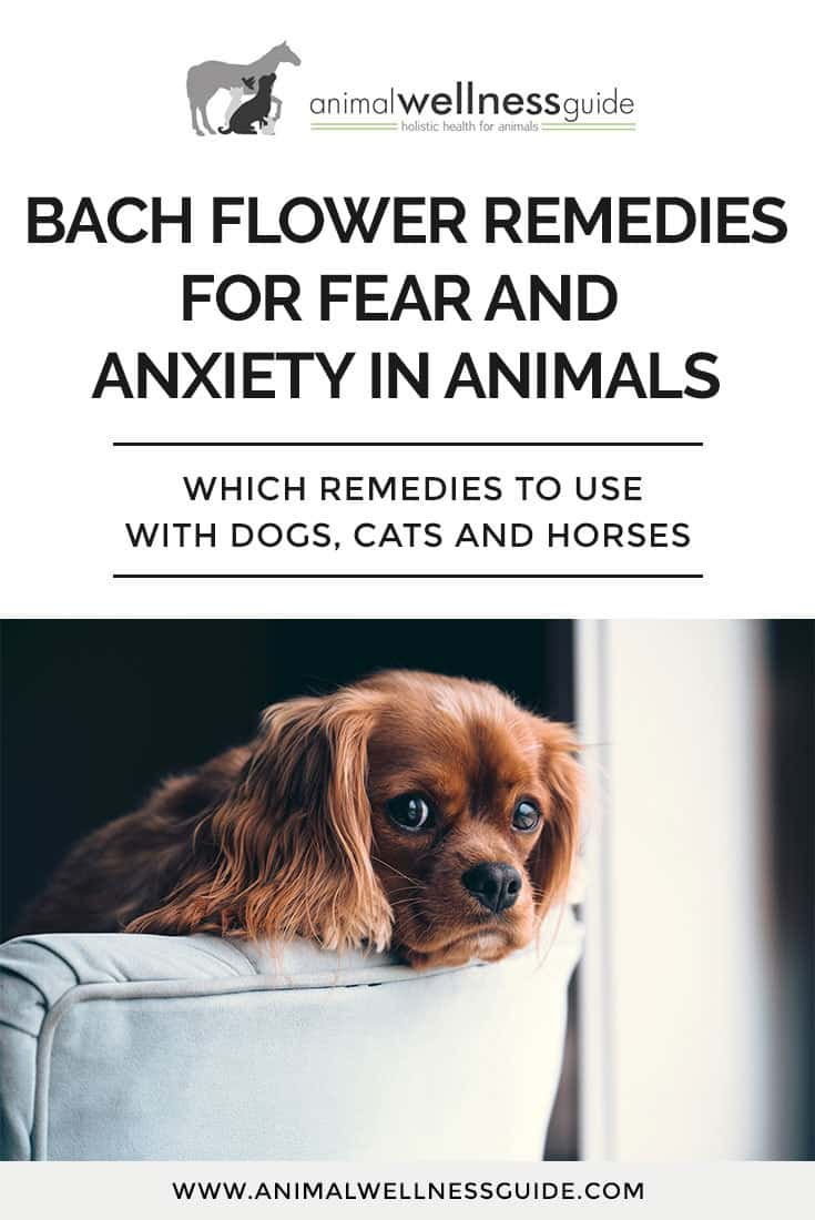 Learn how Bach Flower Remedies can help with fear and anxiety issues in dogs, cats and horses, and which flower essences to use for specific conditions in your pets.