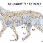 Acupoints-for-canine-seizures