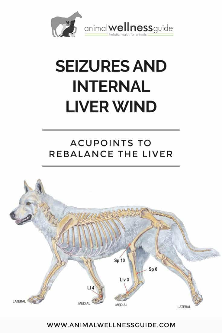 Acupressure points to help reduce the frequency and intensity of seizures in dogs.