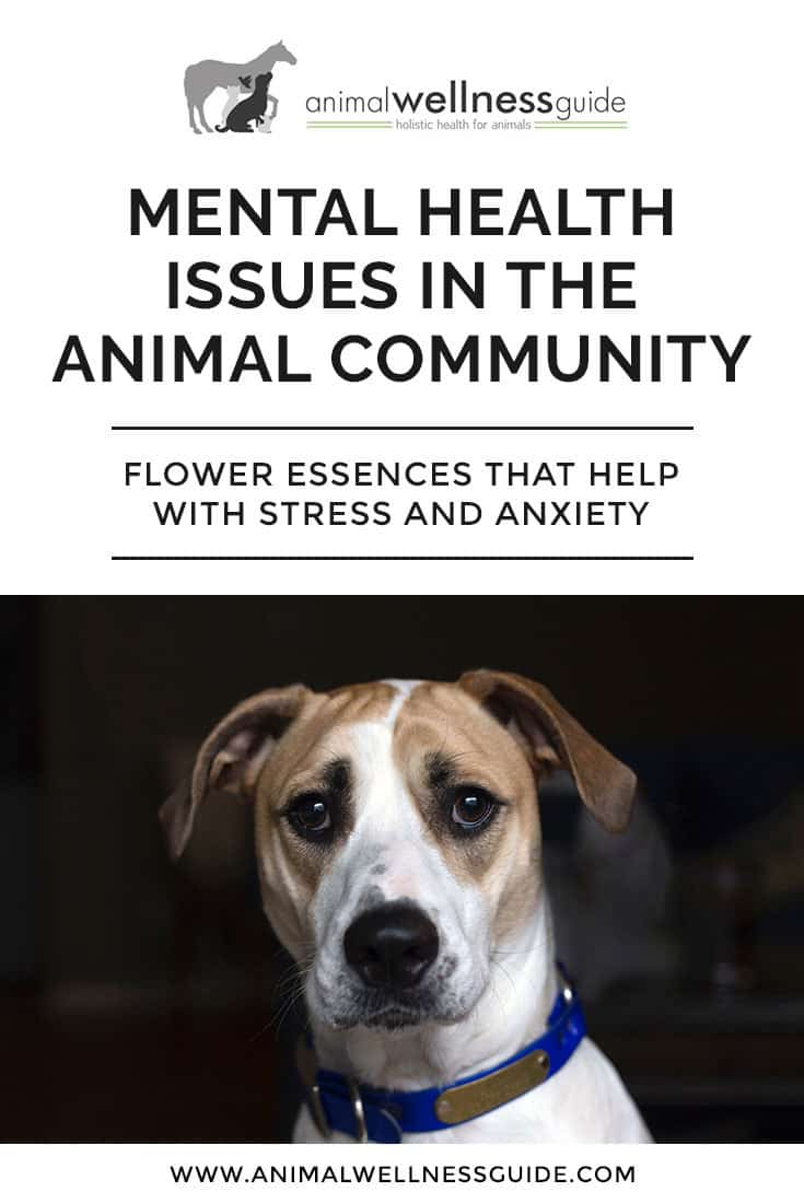 How flower essences can help with stress, fear and anxiety in animals and which  remedies to use for specific fear issues.