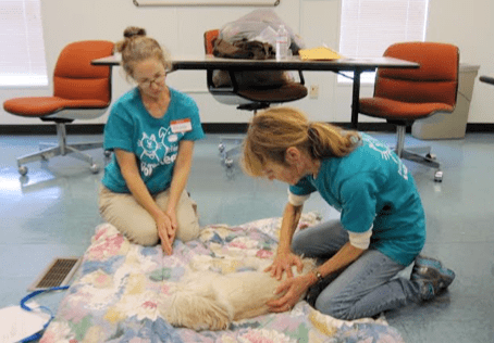 Massage at animal shelters
