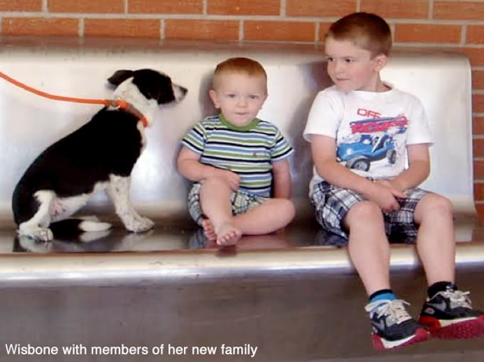 Wishbone_new_family