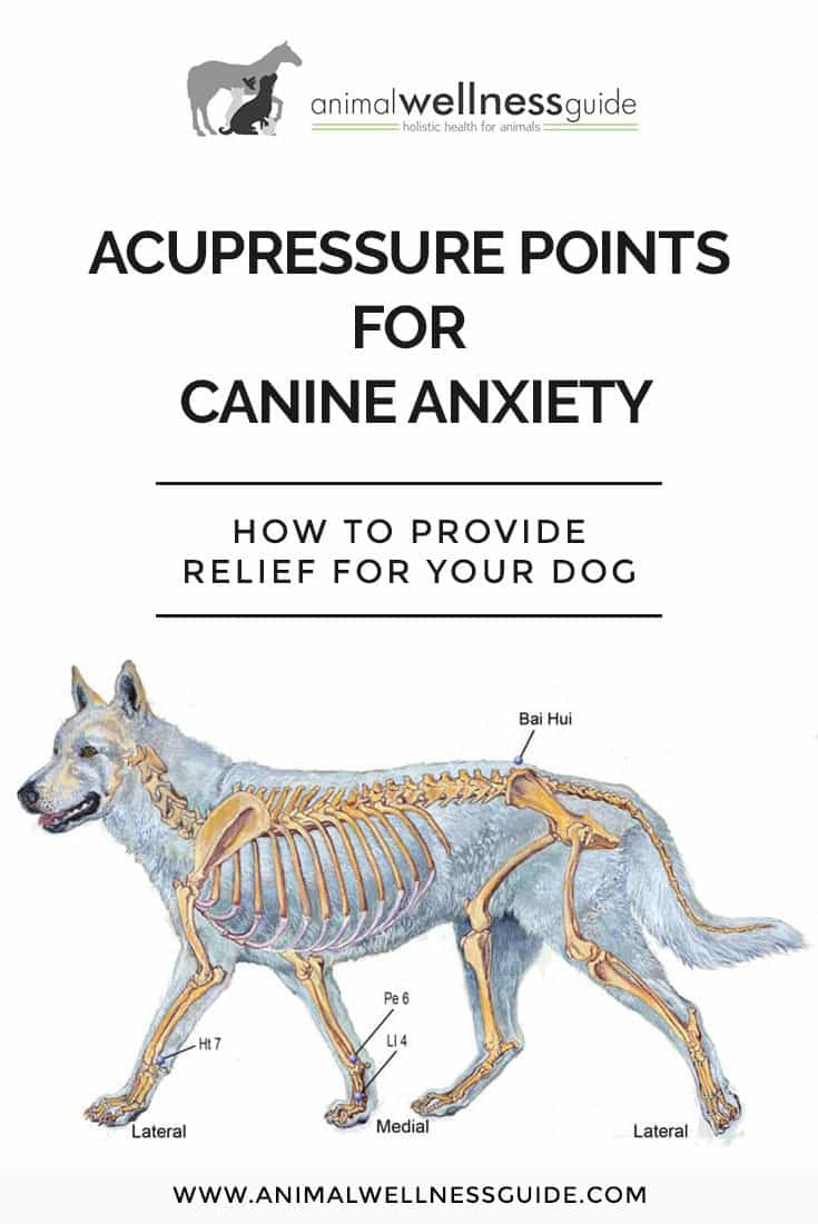 How to help calm your dog's anxiety with the help of acupressure.