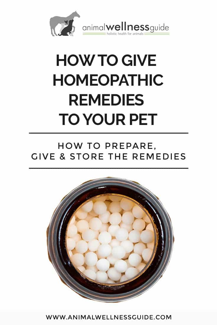 Tips on how to prepare, store, and give homeopathic remedies to animals (and what you can use to help injured or stunned birds)