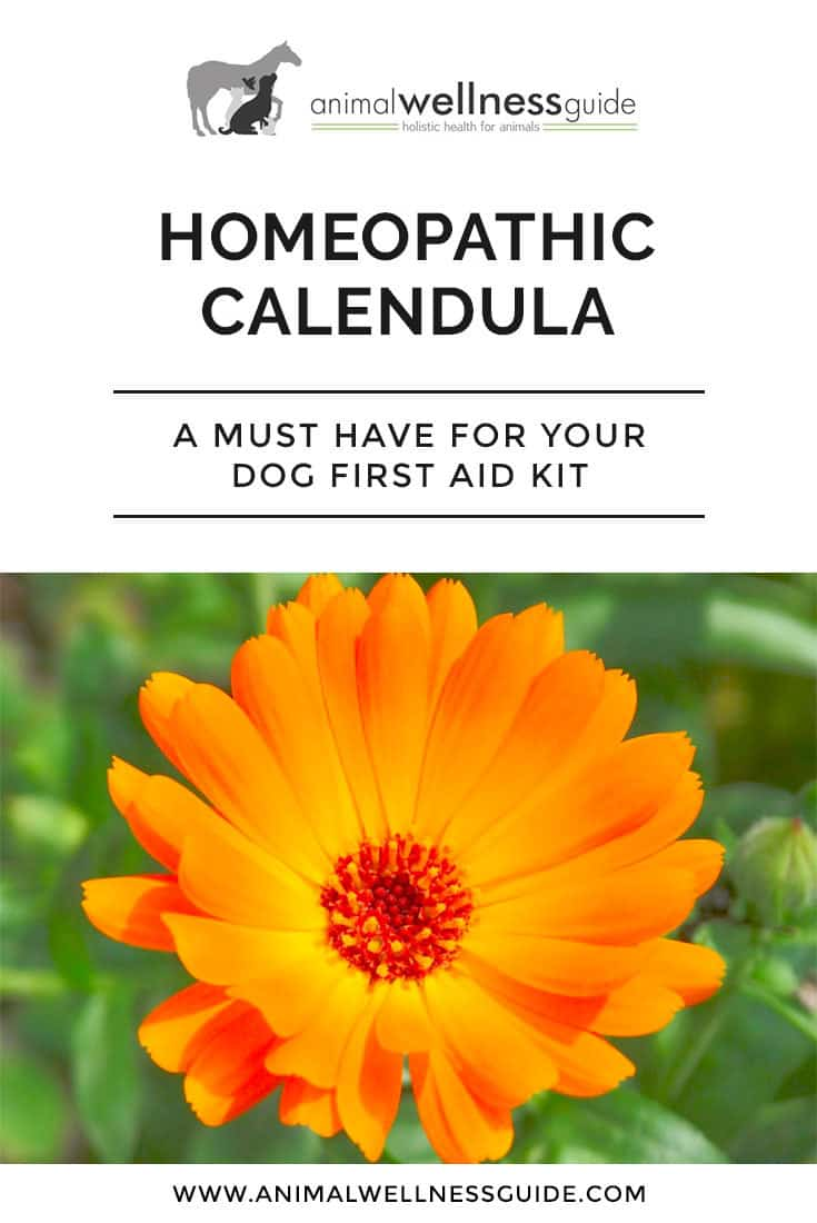 Benefits of homeopathic Calendula and how to use it with animals.
