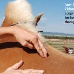 Boost your horse's immune system with acupressure