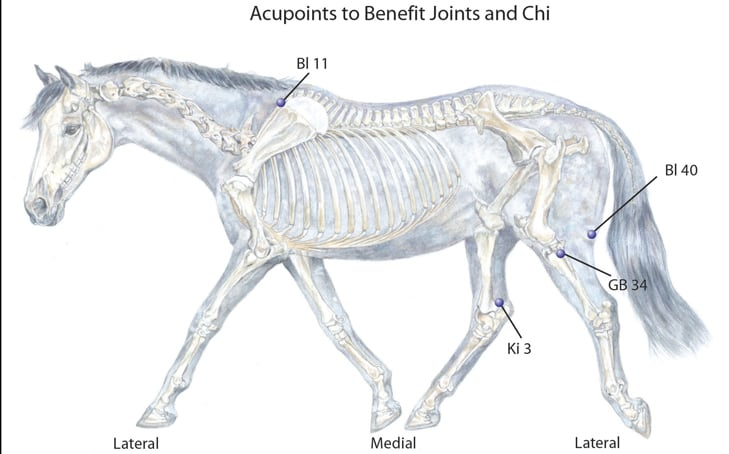 Your Horse's Joints and Chi