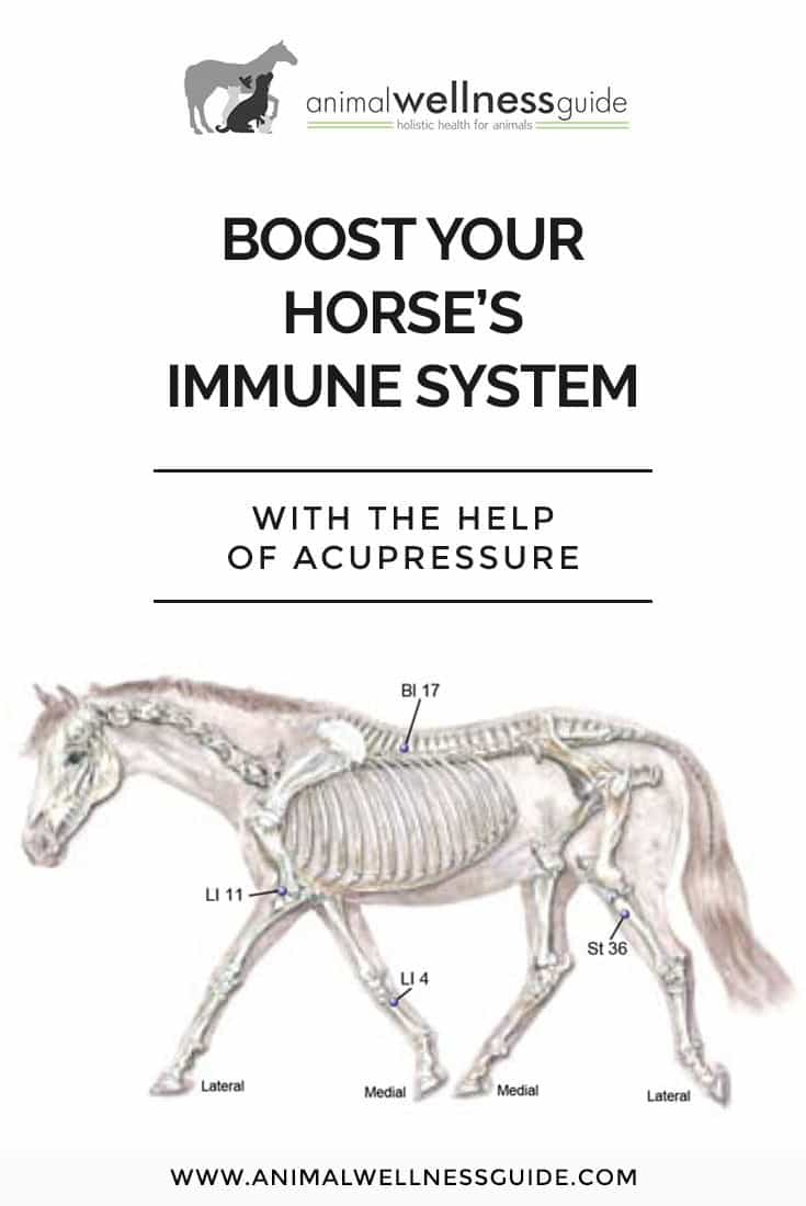 Learn how to support your horse's immune system to avoid illness, recover from injuries, and enhance vitality.