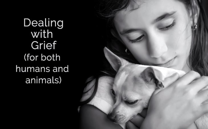Q&A: Dealing with Grief for both Humans and Animals
