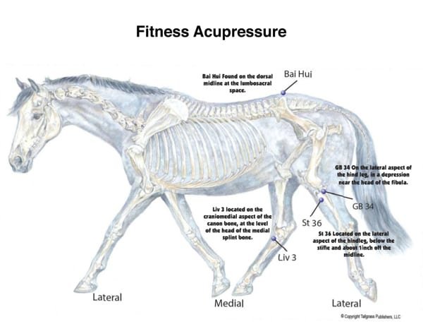 Equine fitness acupressure chart