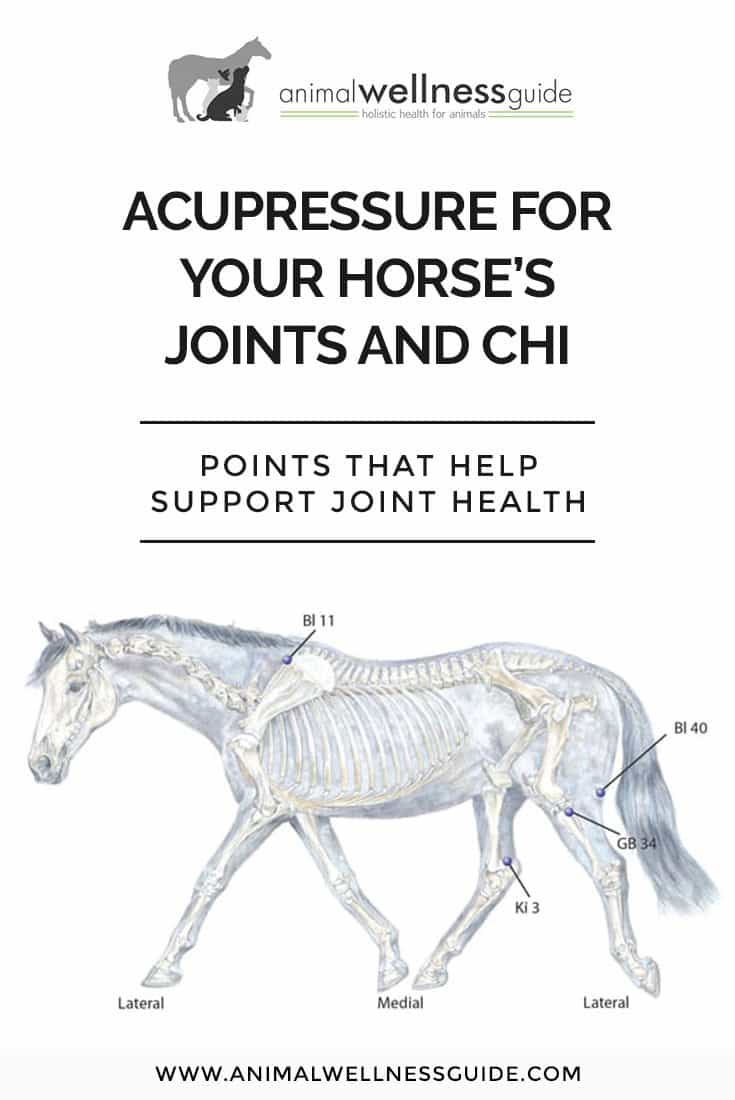 Acupressure points that support the flow of chi through your horse's joints and help with joint conditions such as arthritis.
