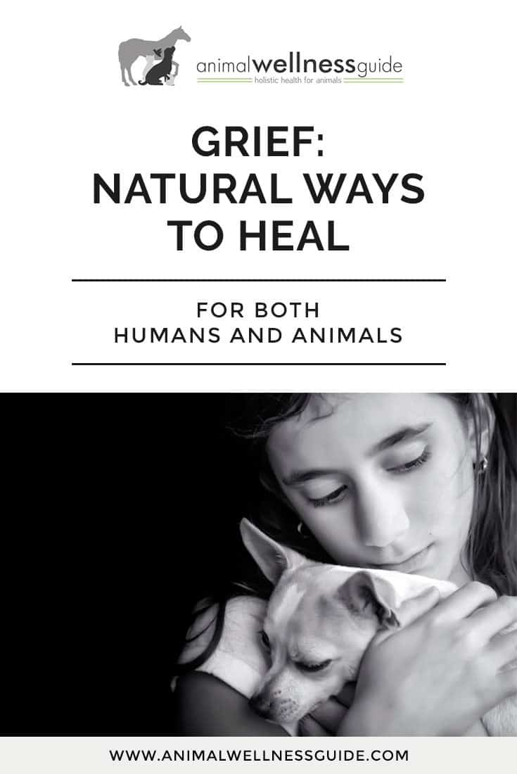 Are you and your other animals grieving the loss of a family pet? Learn about natural ways to help the grief healing process.