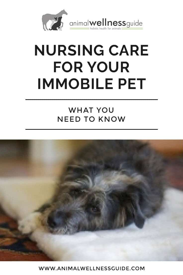 How to care for your pets when they are recovering from illness, injury or surgery.