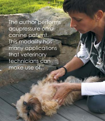 Jill Golgosky doing canine acupressure