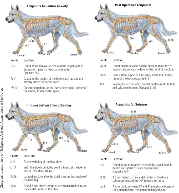 Canine acupressure points for anxiety, seizures, immune system and post operative treatments
