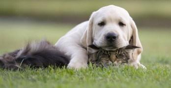 Animals make the best meditation teachers