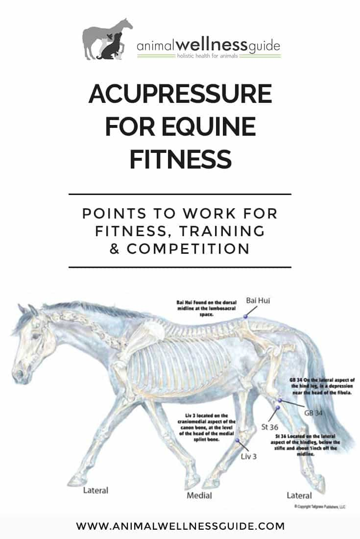 Learn how to use acupressure to help your horse's fitness plan and which points to work to support him during training and when preparing for competition.