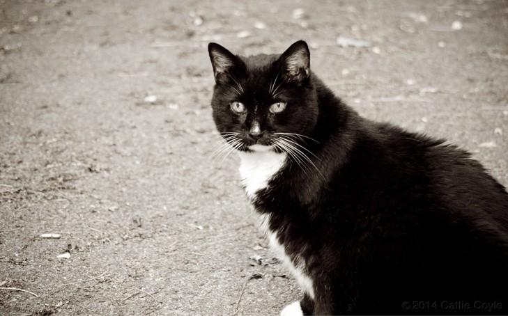 Acupressure for Feline Diabetes