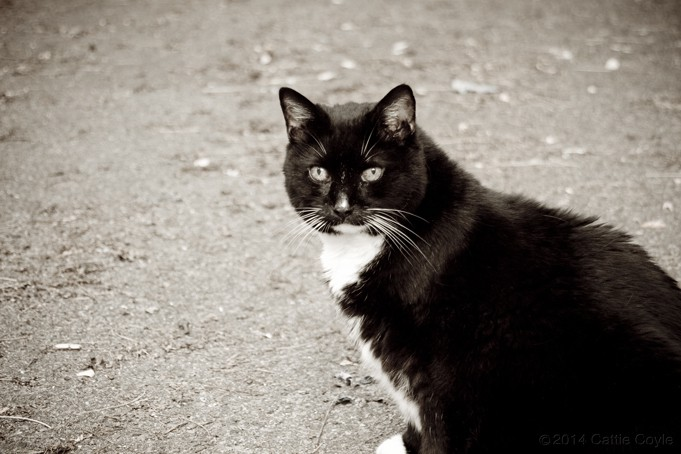 Cat by Cattie Coyle Photography