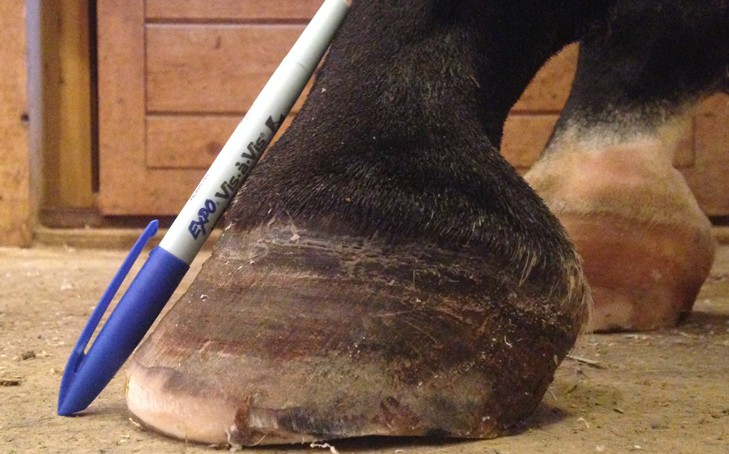 Q&A: Keeping Horse Hooves Healthy