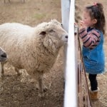 What-happens-when-we-honor-farm-animals-as-teachers-feat-img