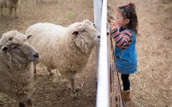 What Happens When We Honor Farm Animals as Teachers?