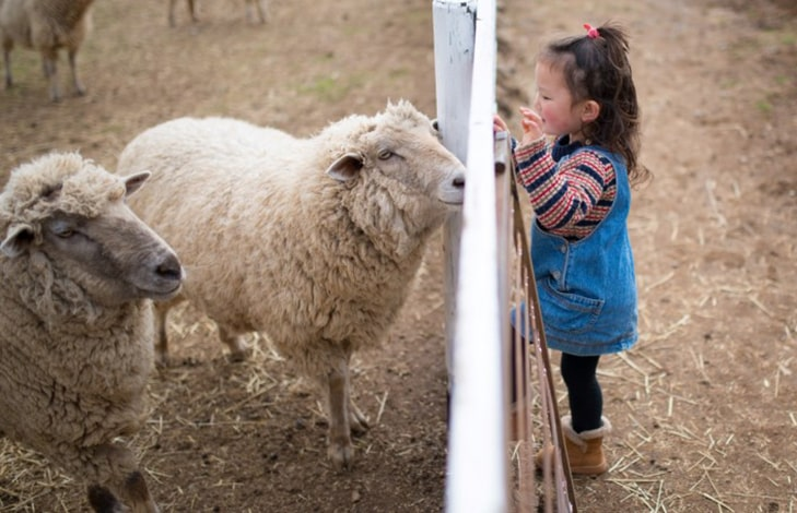 What happens when we honor farm animals as teachers