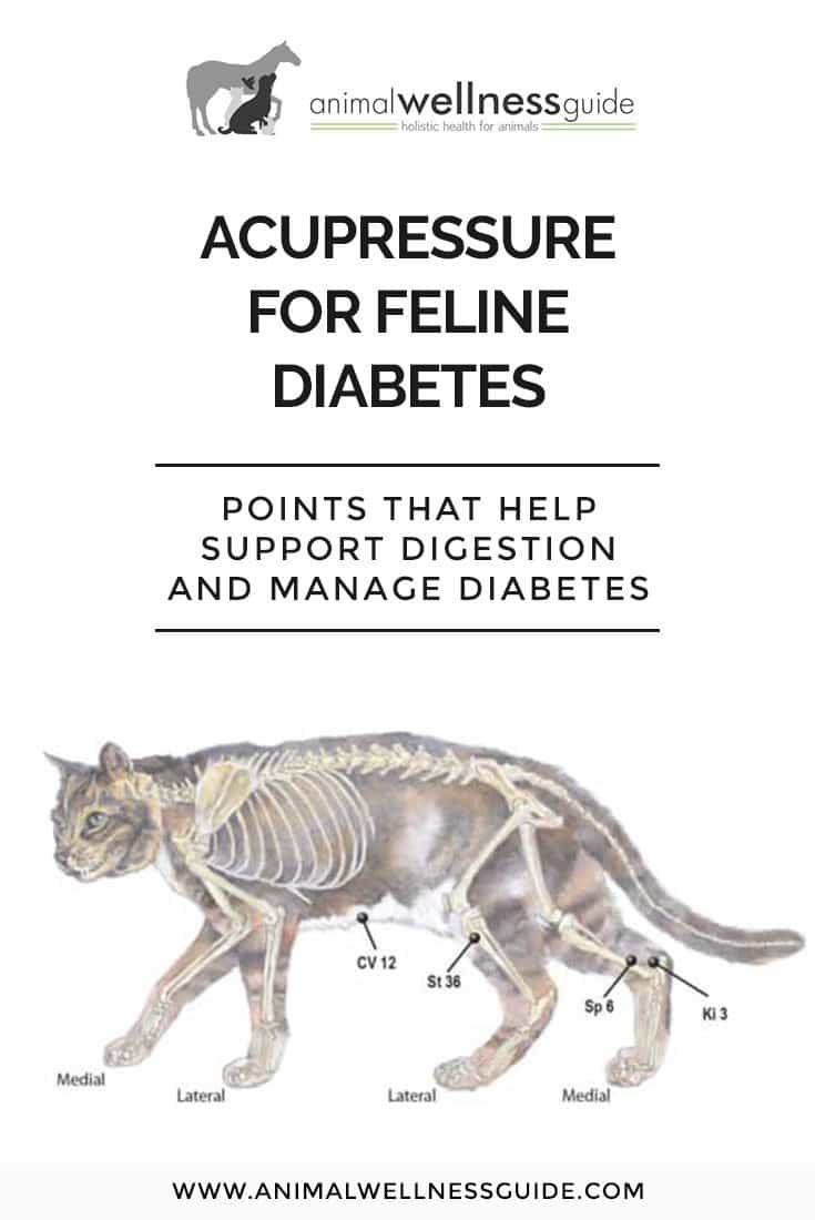 Learn about feline diabetes symptoms, how diet can help a diabetic cat, and which acupressure points to work to help support your cat's digestion and manage the diabetes.